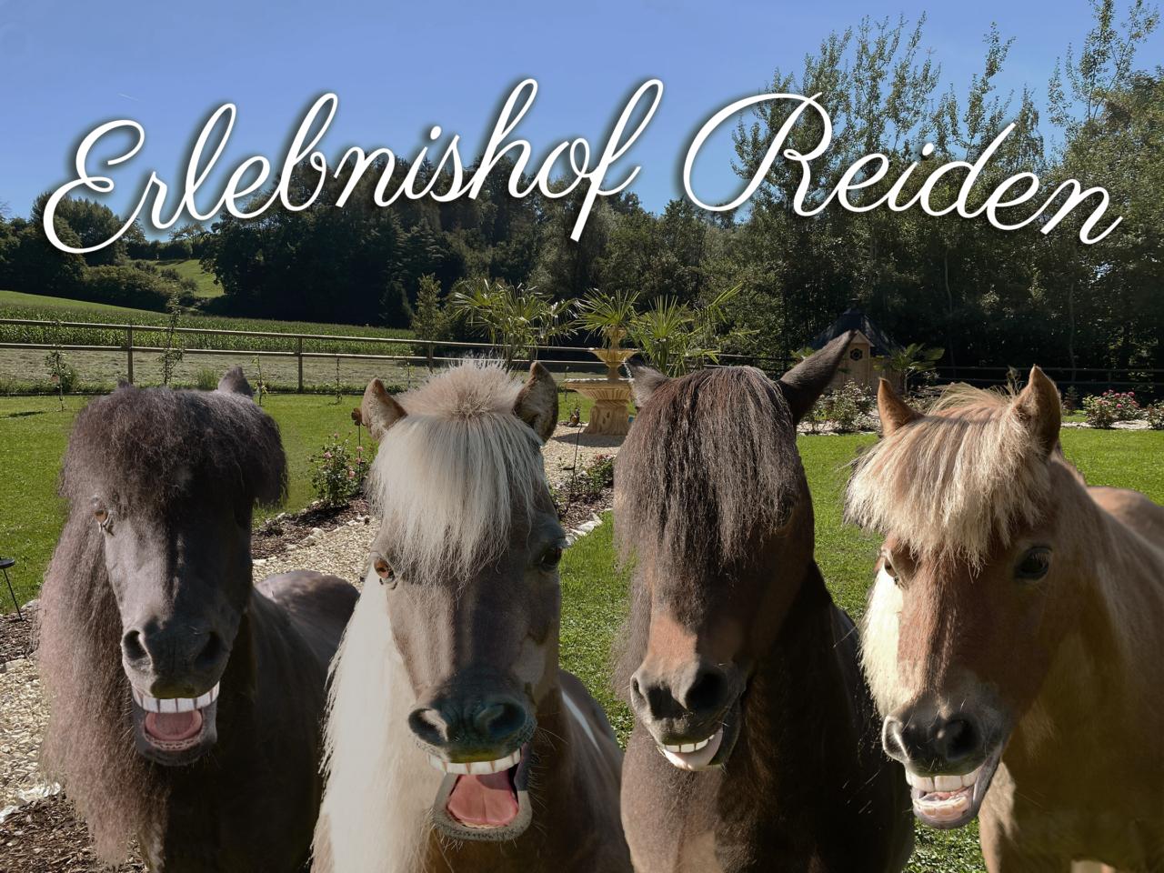 """Bild von vier in die Kamera lachenden Ponys in einem Garten. Oberhalb befindet sich der Schriftzug: """"Erlebnishof Reiden""""."""